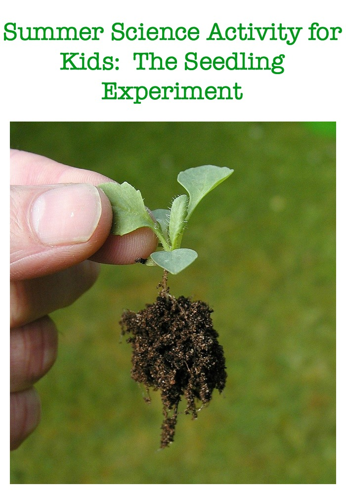 Summer Science Activity for Kids: The Seedling Experiment