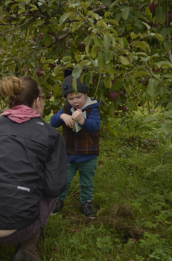 Teacing Kids About Apples: Apple Picking: A Fun Fall Activity for Kids & Families!
