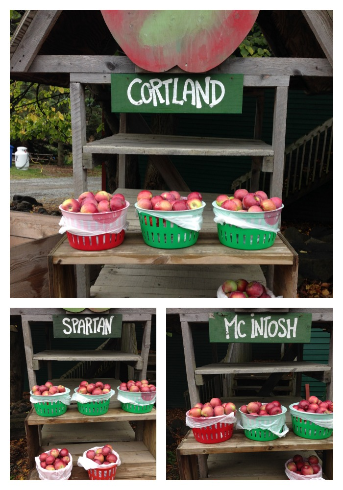 Apple Picking: A Fun Fall Activity for Kids & Families| Types of Apples